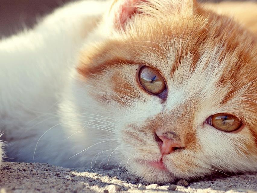 Signs Your Cat May Be Suffering From Joint Problems
