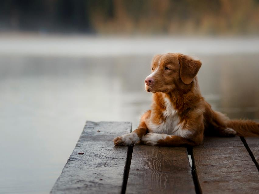 Nutrition For Dogs With Heart And Kidney Disease