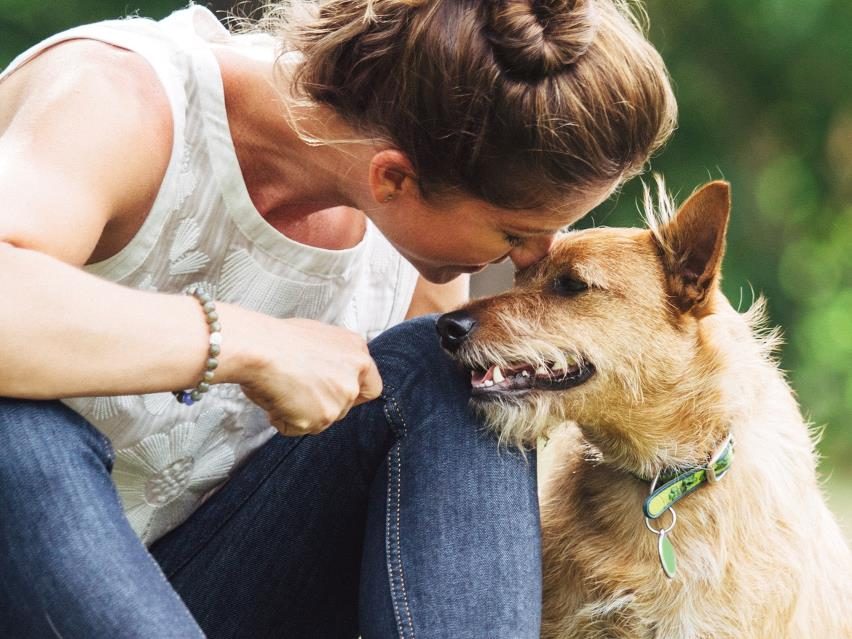 Advice from experts on your dog specific for How much fish oil should i give my dog